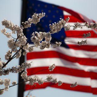 american-flag-flower-july-4th-1093645